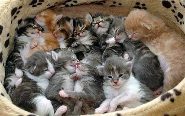 Когда у котят открываются глаза | через сколько