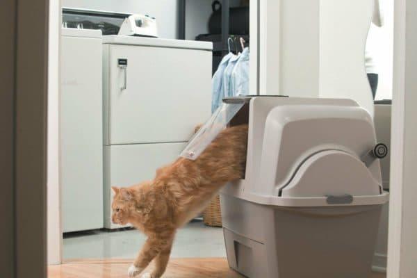 Почему кот перестал ходить в лоток и что с этим делать