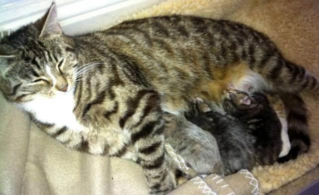 Почему кошка отказывается от котят после родов