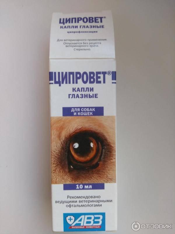 Ципровет глазные капли для кошек   | инструкция по применению таблеток ципровета у кошек