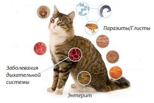 Легочные глисты у кошек: виды, симптомы и лечение