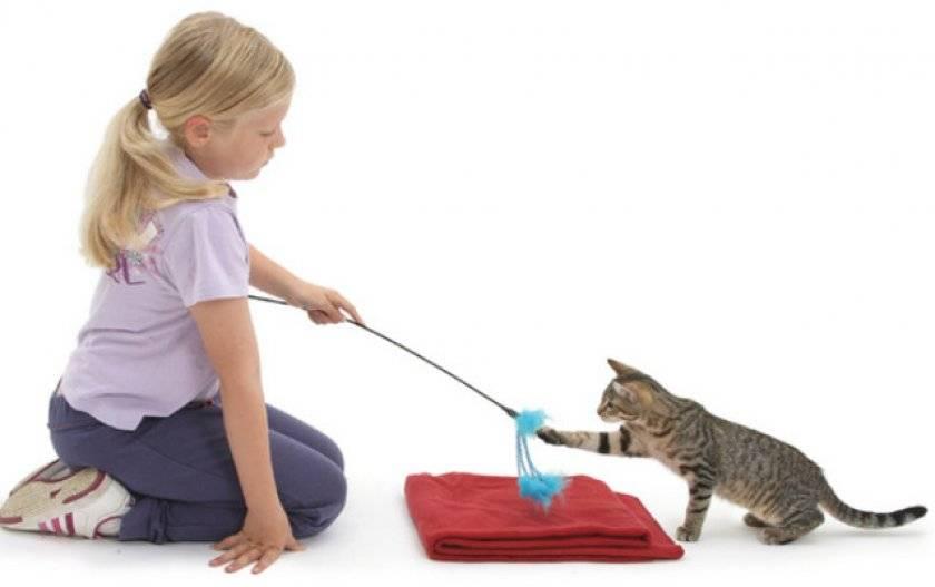 Дрессировка кошек: готовим домашнего артиста