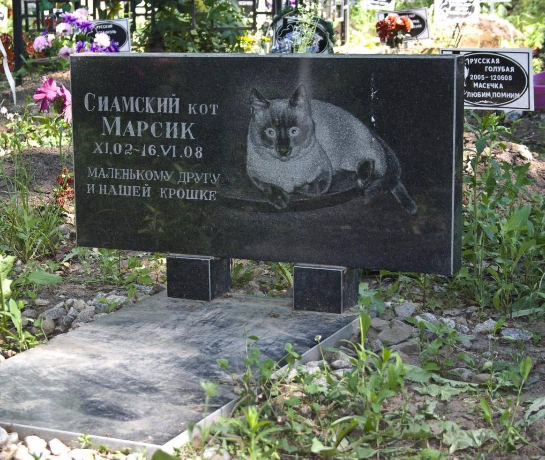 Как похоронить кошку правильно