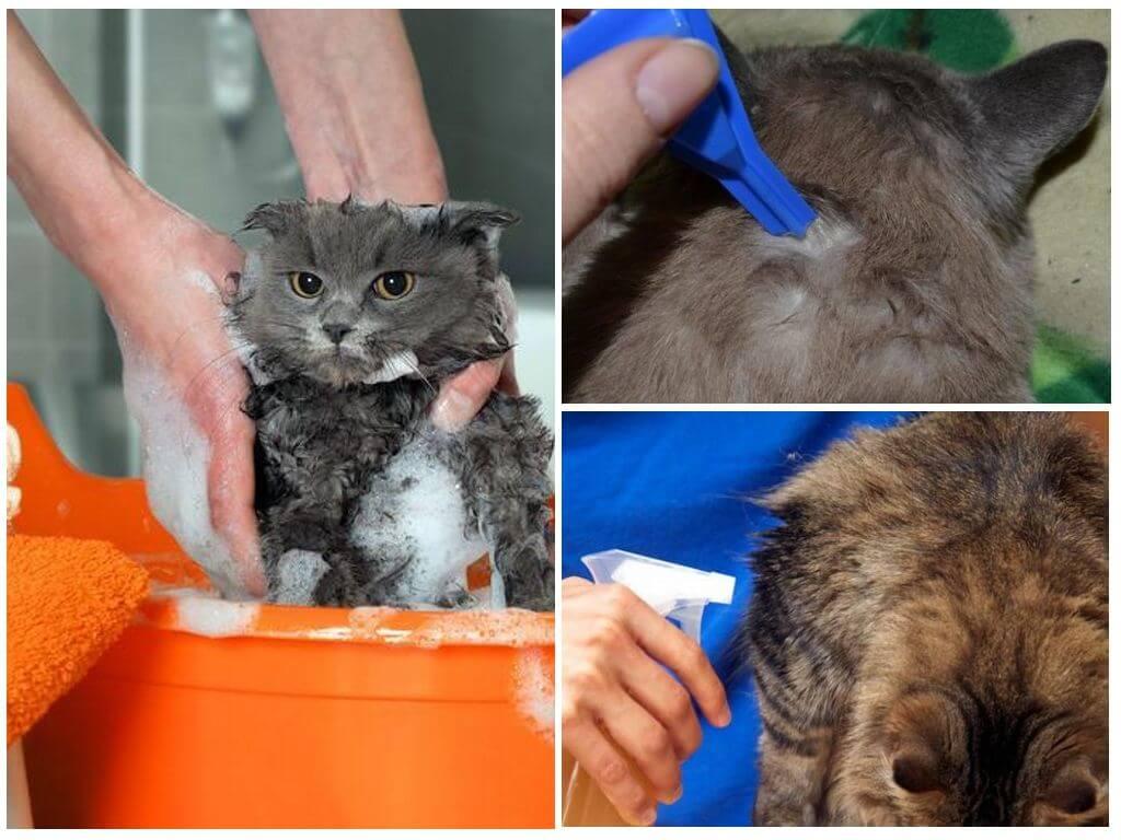 Как избавиться от блох у кошки: самые эффективные препараты и средства для лечения