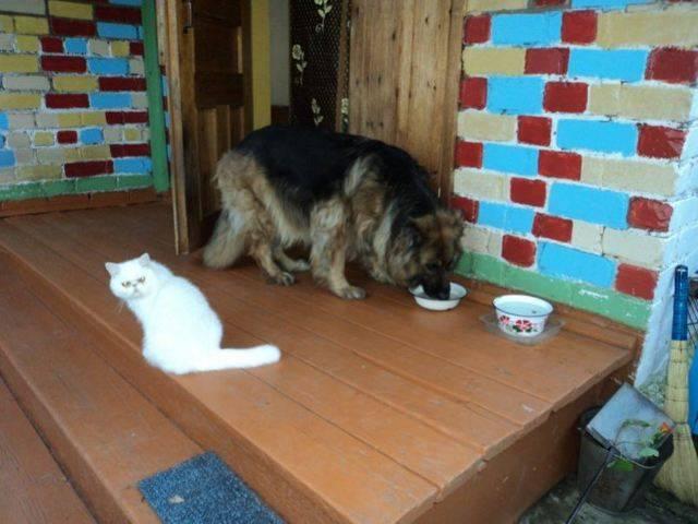 Как подружить собаку с кошкой: практически советы