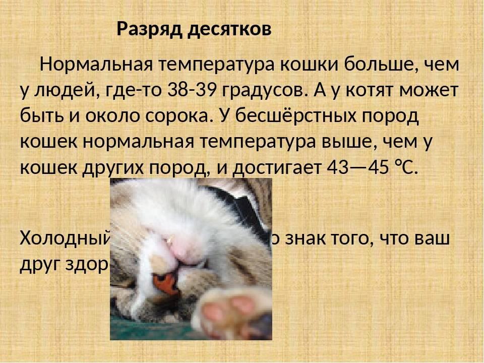 Примеры нормальной температуры тела у кошек: варианты у разных пород и возрастов