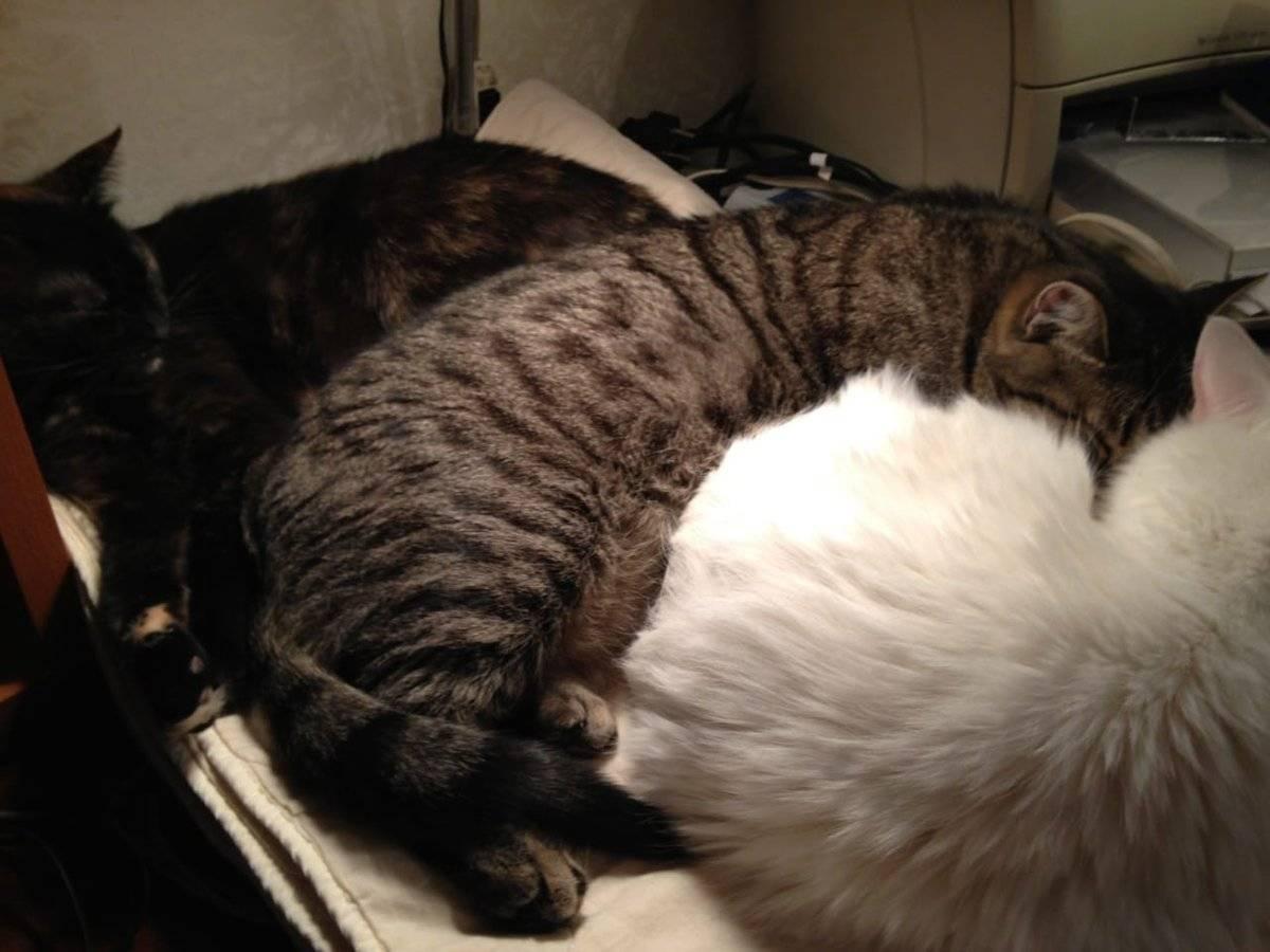 Сонник новая кошка. к чему снится новая кошка видеть во сне - сонник дома солнца