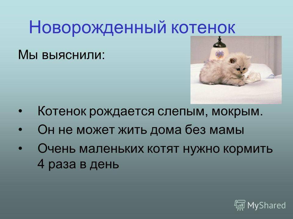 Сколько проживет котенок без еды и воды. сколько дней может кот или кошка прожить без еды и воды