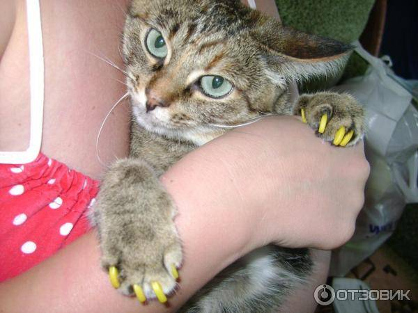 Дикие повадки домашних животных: зачем кошки топчут нас лапками