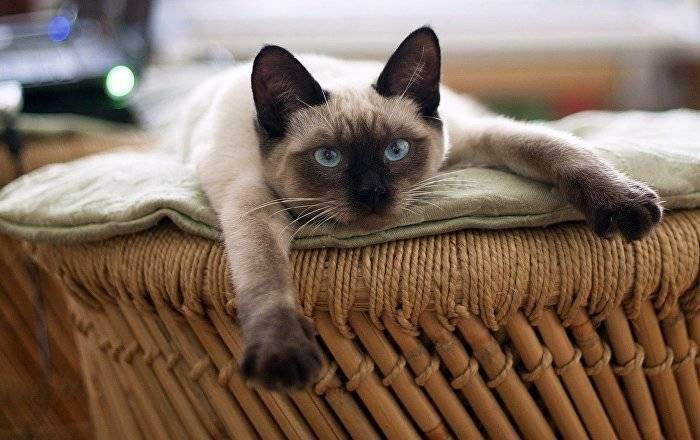 Сонник кошка или животное из семейства кошачьих. к чему снится кошка или животное из семейства кошачьих видеть во сне - сонник дома солнца
