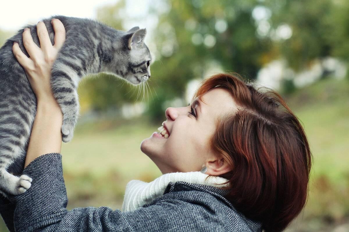 Можно ли целовать домашних кошек в морду