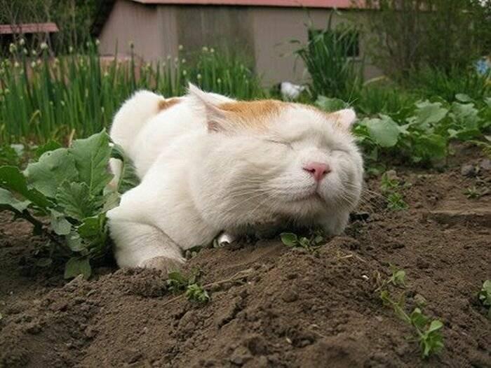 Почему кошка не ест сухой корм и что делать хозяину?