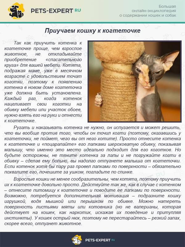 """Полезные советы как приучить кота к когтеточке: инструкция на портале """"лапы и хвост"""""""