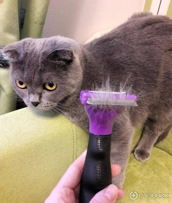 Фурминатор для кошек и котов: что это, как выбрать и пользоваться