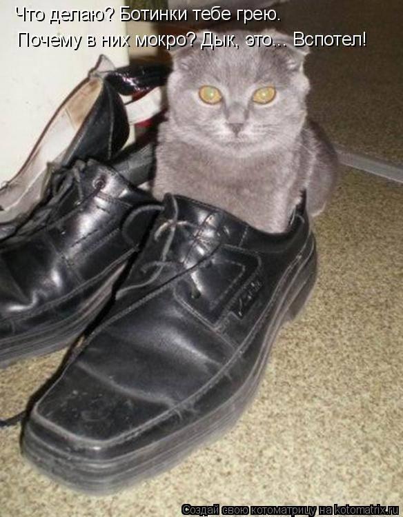 8 причин почему кошка постоянно облизывается