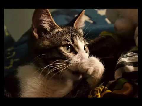 Насморк у кошек: причины и чем лечить в домашних условияхветлечебница рос-вет