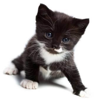 Странная кошка после родов - почему кошка после родов не ест - запись пользователя конфликт (conflict) в сообществе домашние животные в категории помогите советом - babyblog.ru