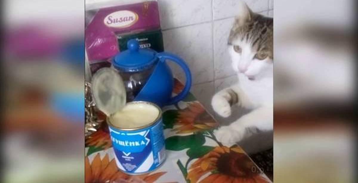 Можно ли кошкам молоко – развенчиваем миф о кошках и их мисочках с молоком