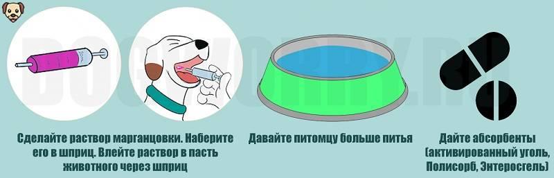 Активированный уголь коту: когда применяют, дозировка
