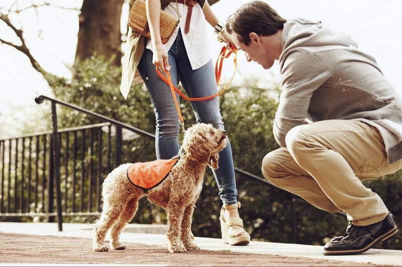 Кого лучше завести: кота или собаку — интересное противостояние