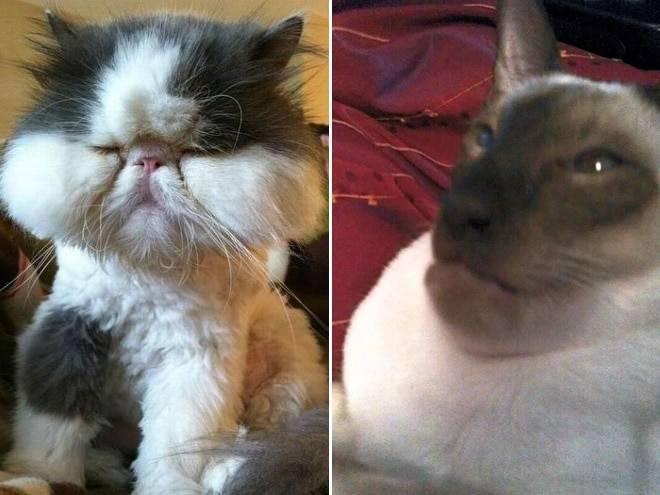 Укусила кошка: что делать, первая помощь, лечение, осложнения