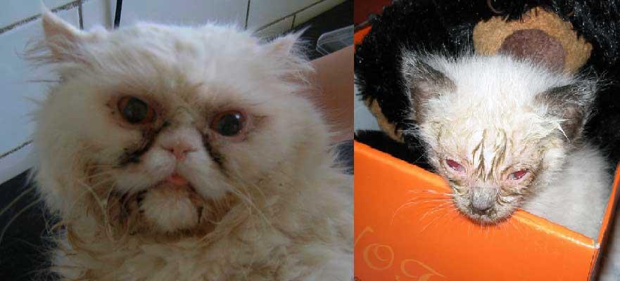 Кот чихает и слезятся глаза – чем лечить в домашних условиях, в чем причина?