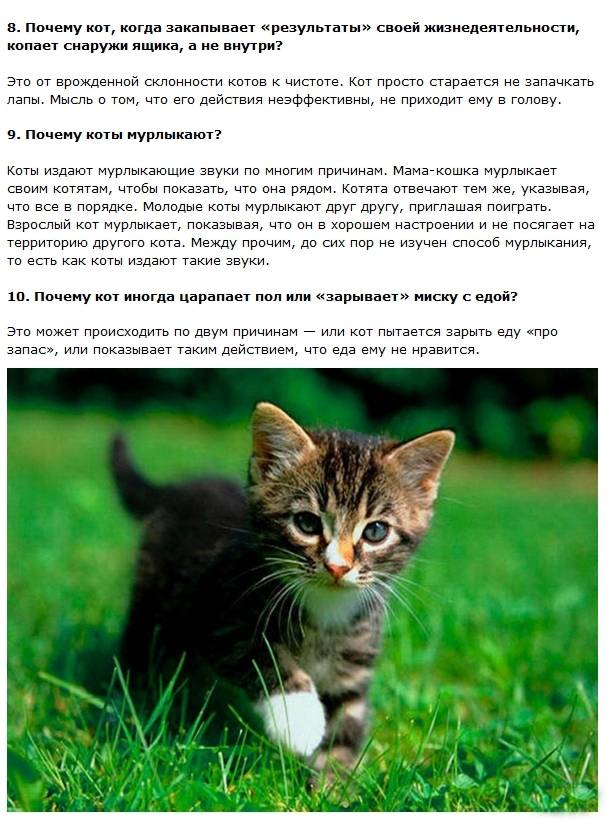 Интересные мифические, исторические и научные факты о котах и кошках