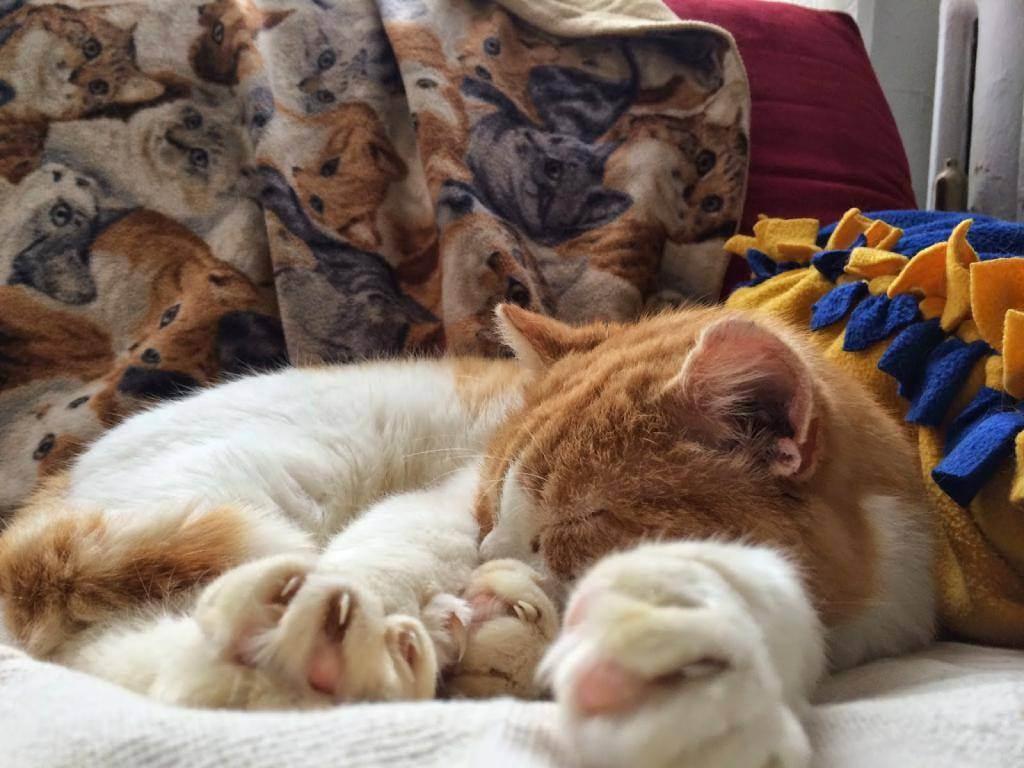 Кошка ест оливки (маслины) — почему и полезно ли это? почему кошки любят оливки и маслины, что их привлекает? можно ли кошкам давать оливки