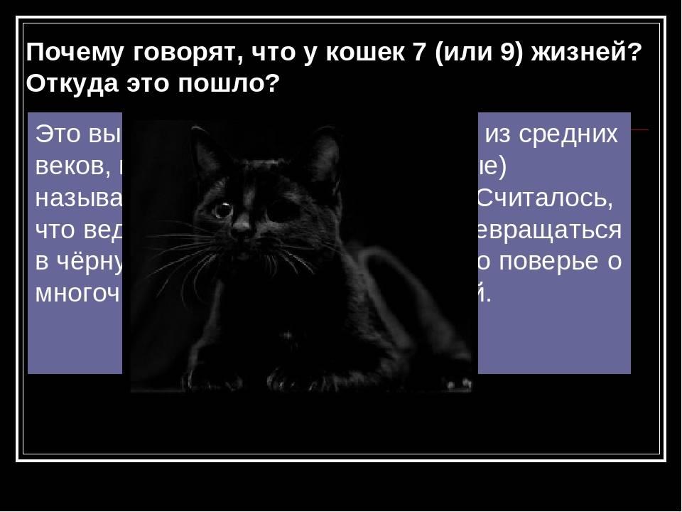 Правда ли что у кошек 9 жизней: почему так говорят?