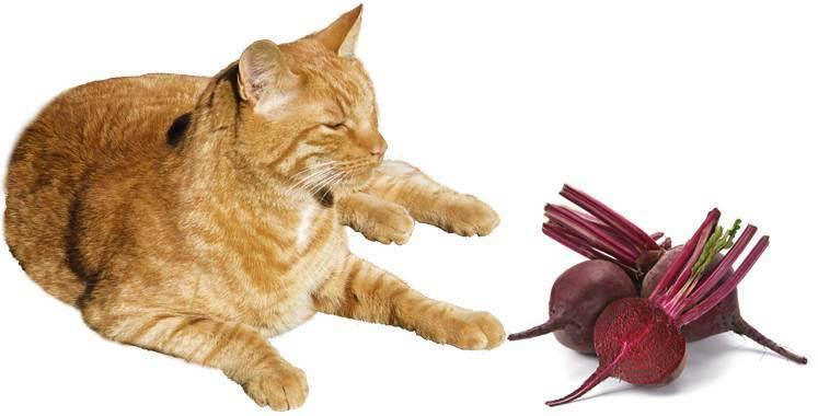 Можно ли кошкам свеклу?