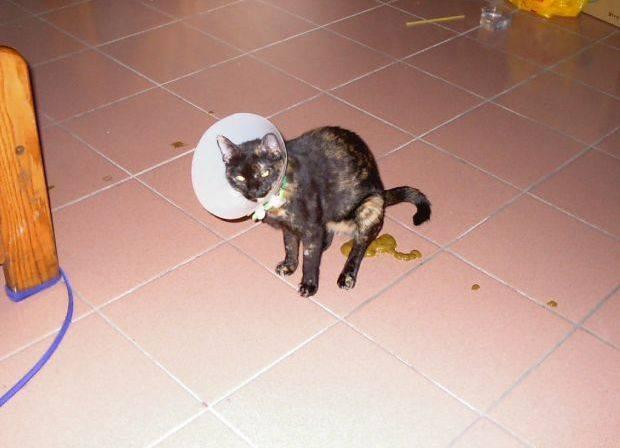 Если кошка ездит на попе. почему кошка ездит на попе. почему кошка катается по полу на спине