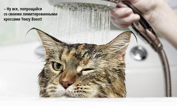 Как кошка пьет биомеханика движений + видео