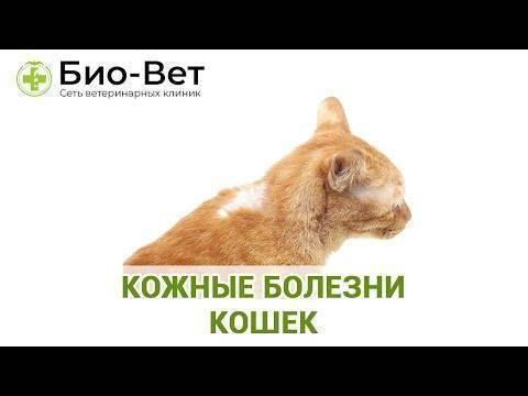 Первые симптомы заболеваний у кошек