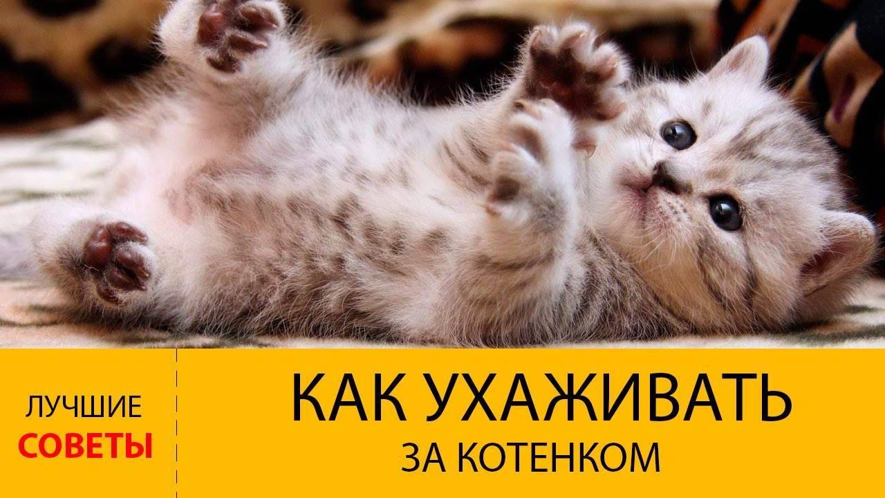 Гигиена собак и кошек