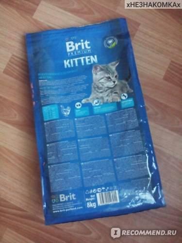Корм брит (brit care) для кошек: состав, плюсы и минусы