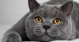 Как определить возраст кошки - как узнать сколько лет кошке, возраст кошек по человечески - всё о кошках и котах