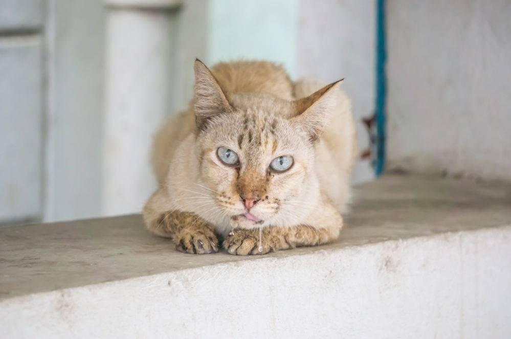 Почему у кошки текут слюни прозрачные как вода каплями, что делать