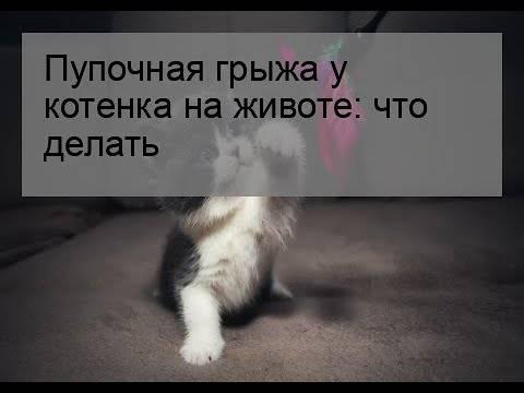 У кота урчит в животе чем лечить