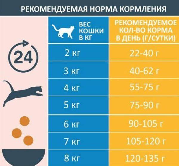 Сколько раз в день кормить кошку или кота, как правильно определить количество (суточную норму) корма для котенка и взрослого животного