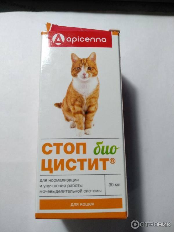 Стоп-цистит для кошек: инструкция по применению, отзывы