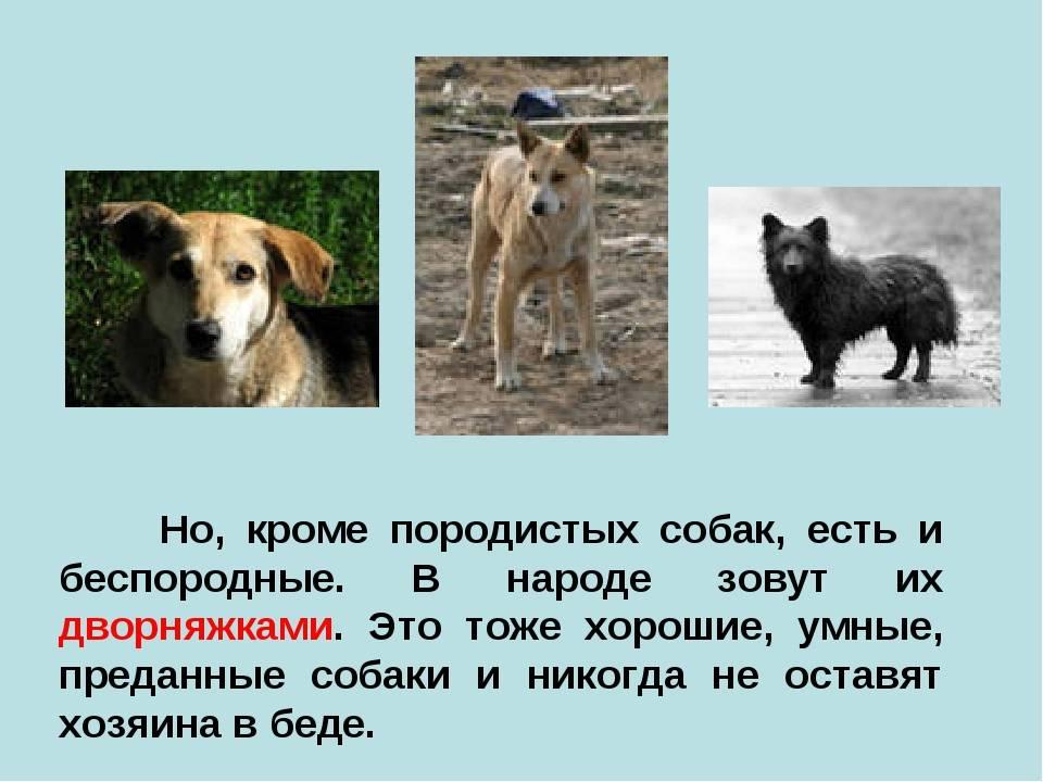 Как могут выглядеть дворняжки: разновидности и описание беспородных собак