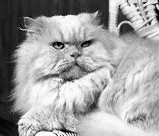 Как организовать кошачий питомник
