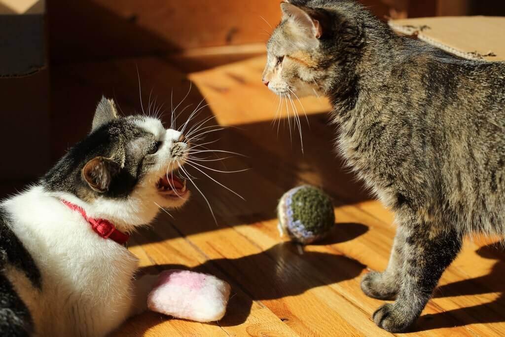 Котики против песиков: почему кошка шипит на собаку? — 4 лапки