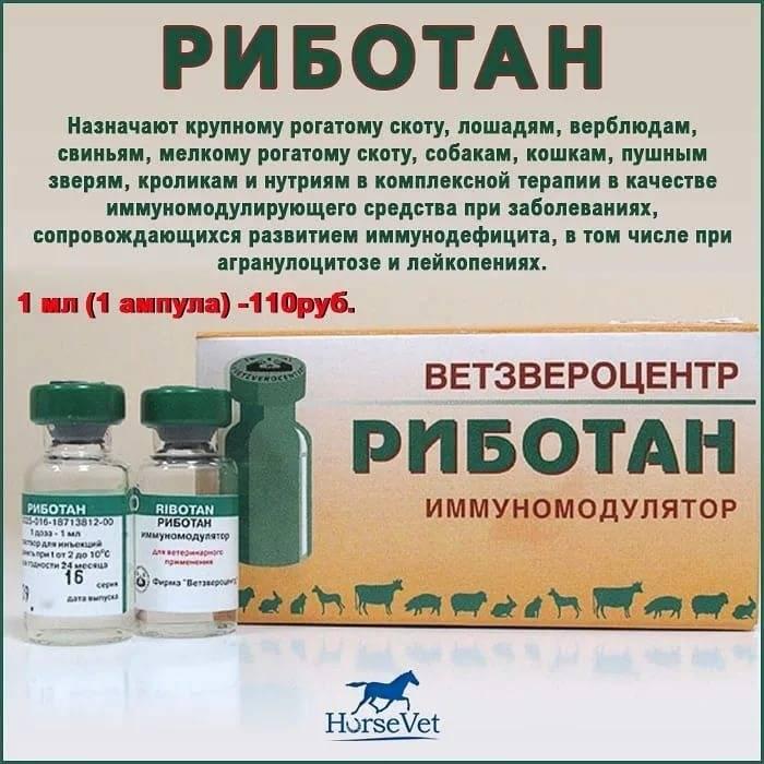 Риботан: когда и как использовать иммуномодулятор для кошек. риботан: инструкция по применению риботан для кошек — отзывы - новая медицина