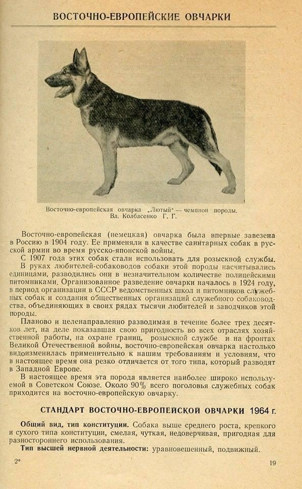 Щенки немецкой овчарки в 3 месяца (26 фото): особенности кормления. как выглядит щенок и сколько он должен весить?