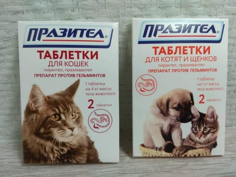 Как часто нужно глистогонить кошку, имеющую доступ к улице, и домашнюю
