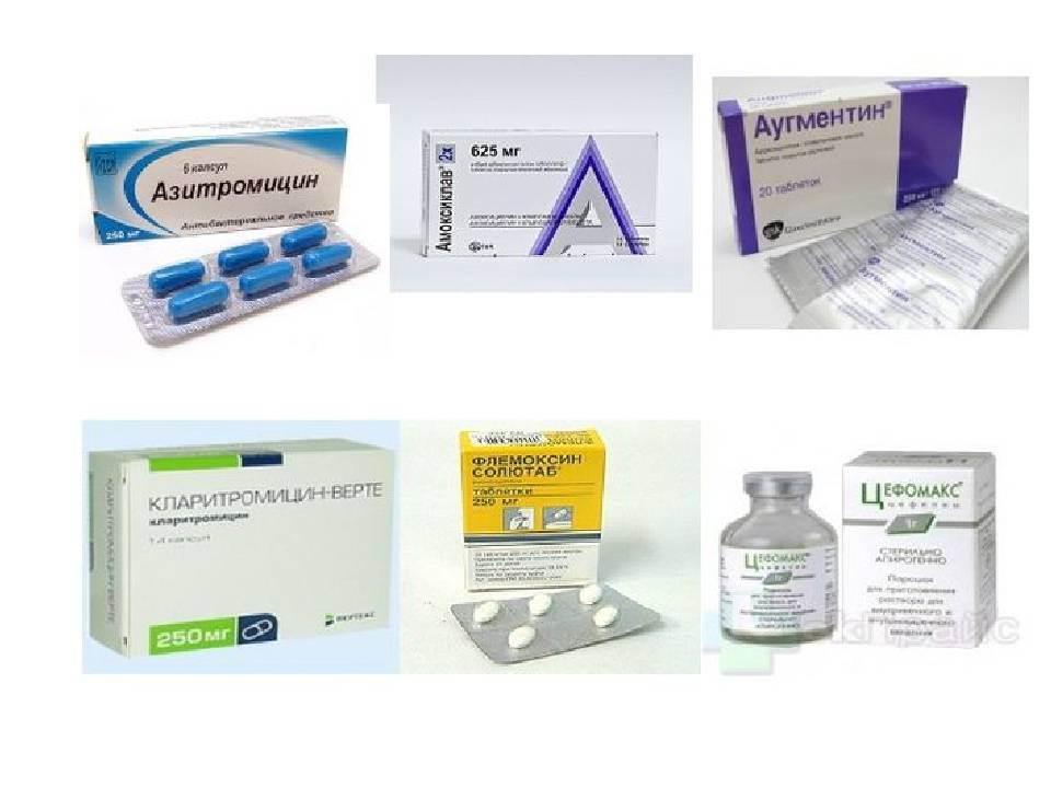 Антибиотики для кошек — список, уколы, при инфекции, в таблетках