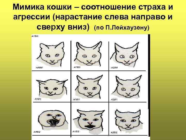 Агрессия у кошек: виды