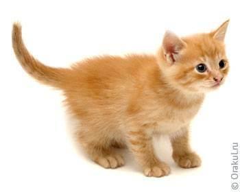 К чему надо быть готовым, беря кошку? - что нужно знать, прежде чем взять котенка, взрослую бездомную кошку или кошку из приюта - всё о кошках и котах