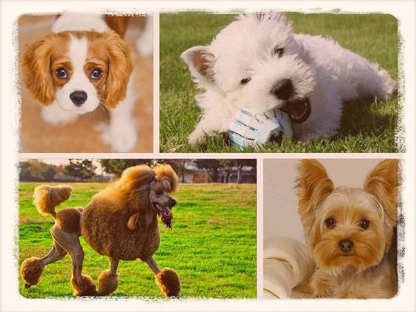 Собаки, которые не линяют